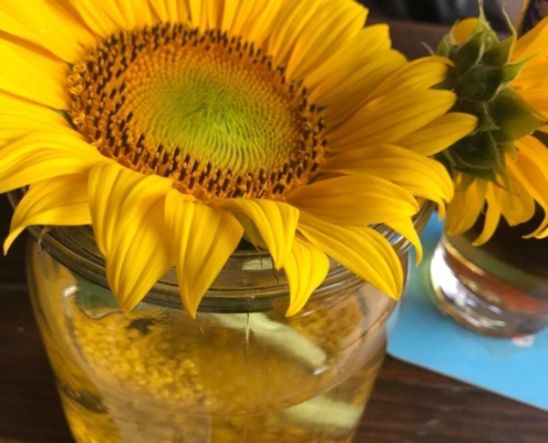Daniela Engnoth - Sonnenblume